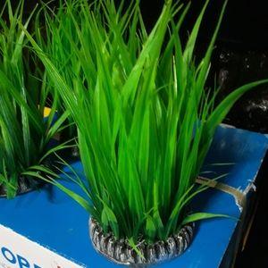 Grass rings for aquariums